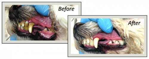 Before/After dental cleaning photos